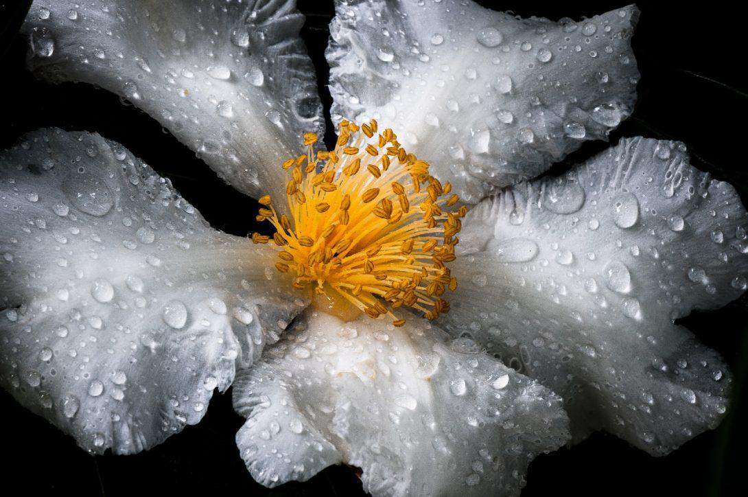 virágpor